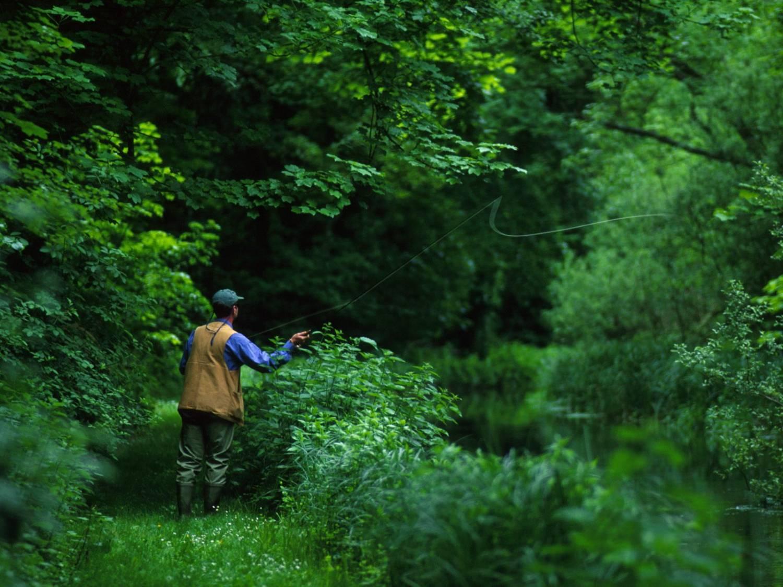 ловля сазана на течении