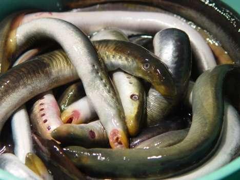на что клюет речная рыба в поволжье